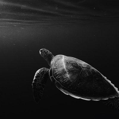 Deep Turtle